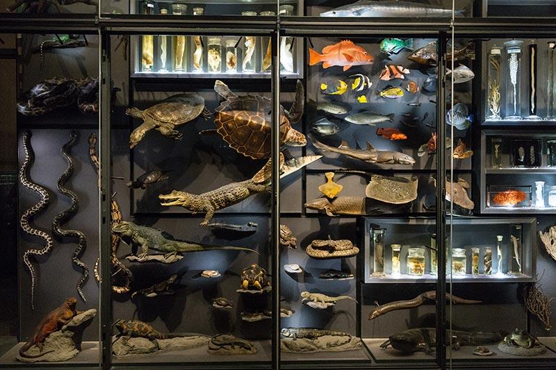 Galerie de l'évolution au Naturkunde-museum - Photo Didier Laget