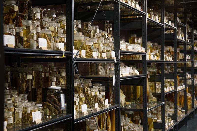 Naturkunde Museum Nass  Sammlungen - Photo Didier Laget