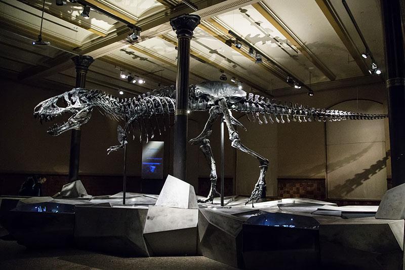 Tristan Otto le Tyrannosaurus Rex du Muséum d'Histoire Naturelle de Berlin - Photo Didier Laget
